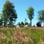 Village Green Park Grass